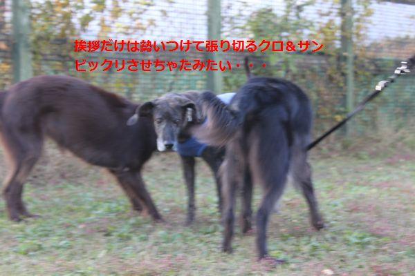 b0148945_0213422.jpg