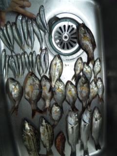 釣れたお魚たち_e0114246_10365739.jpg