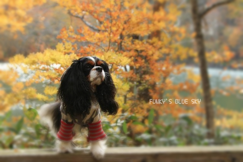 晩秋の山へ 【その2・冬は、もうすぐそこに・・】_c0145250_20403919.jpg