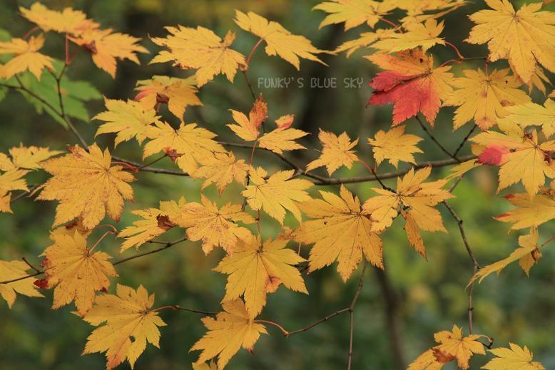 晩秋の山へ 【その2・冬は、もうすぐそこに・・】_c0145250_2040998.jpg