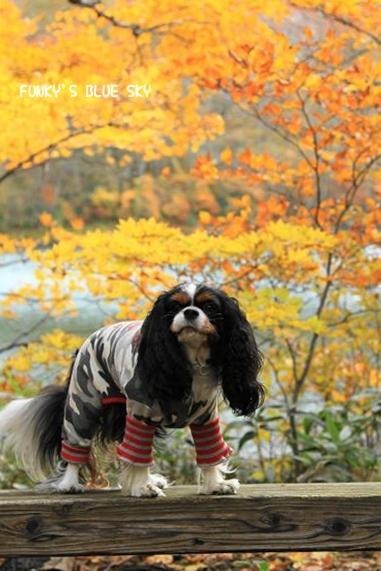 晩秋の山へ 【その2・冬は、もうすぐそこに・・】_c0145250_2041517.jpg
