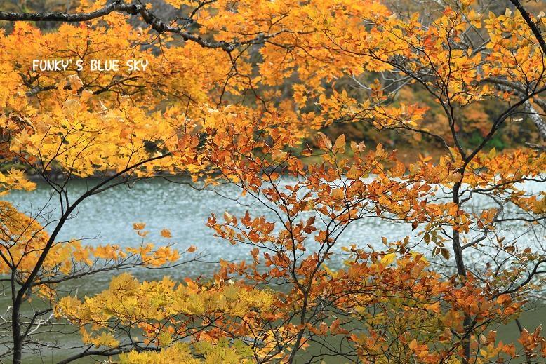 晩秋の山へ 【その2・冬は、もうすぐそこに・・】_c0145250_20423271.jpg