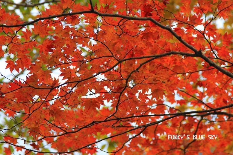晩秋の山へ 【その2・冬は、もうすぐそこに・・】_c0145250_20424997.jpg