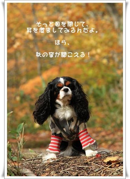 晩秋の山へ 【その2・冬は、もうすぐそこに・・】_c0145250_2043883.jpg