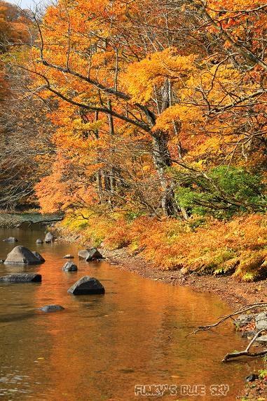 晩秋の山へ 【その2・冬は、もうすぐそこに・・】_c0145250_20454792.jpg