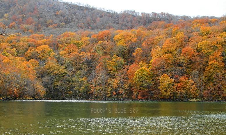 晩秋の山へ 【その2・冬は、もうすぐそこに・・】_c0145250_20495916.jpg