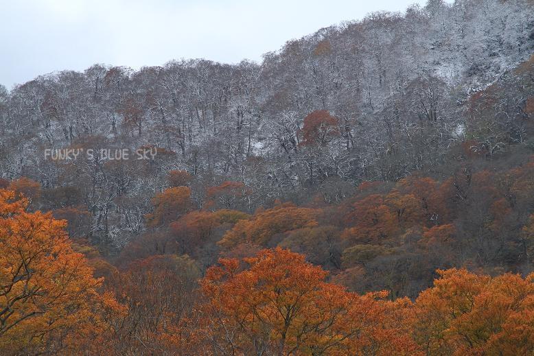 晩秋の山へ 【その2・冬は、もうすぐそこに・・】_c0145250_20502924.jpg