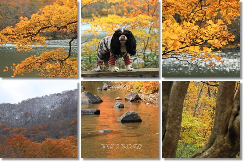 晩秋の山へ 【その2・冬は、もうすぐそこに・・】_c0145250_20512719.jpg