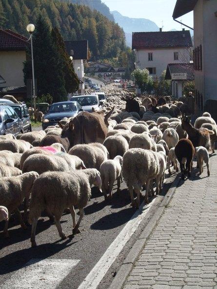 羊大行進に遭遇_f0161652_347104.jpg