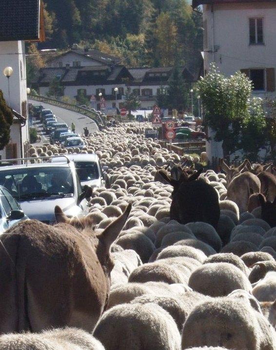 羊大行進に遭遇_f0161652_359595.jpg