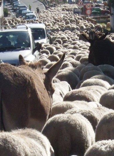 羊大行進に遭遇_f0161652_421531.jpg
