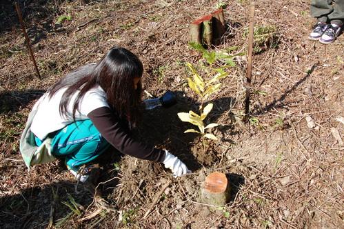 岬高校「MISAKIプロジェクト2010」;孝子の森植樹サポート_c0108460_1826936.jpg