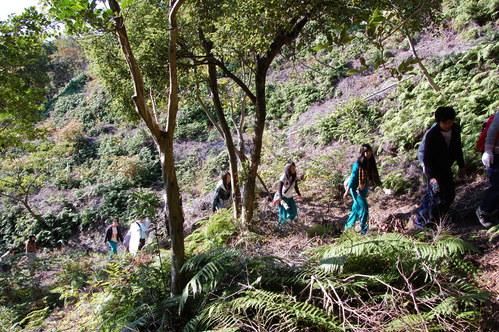 岬高校「MISAKIプロジェクト2010」;孝子の森植樹サポート_c0108460_182826100.jpg