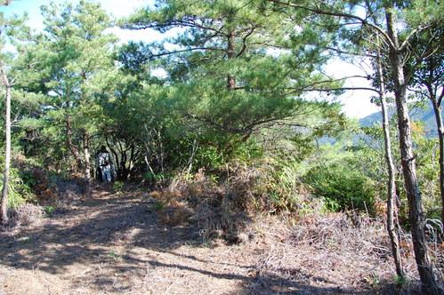 岬高校「MISAKIプロジェクト2010」;孝子の森植樹サポート_c0108460_1829020.jpg