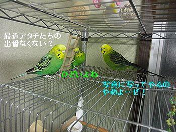 f0196665_10062.jpg