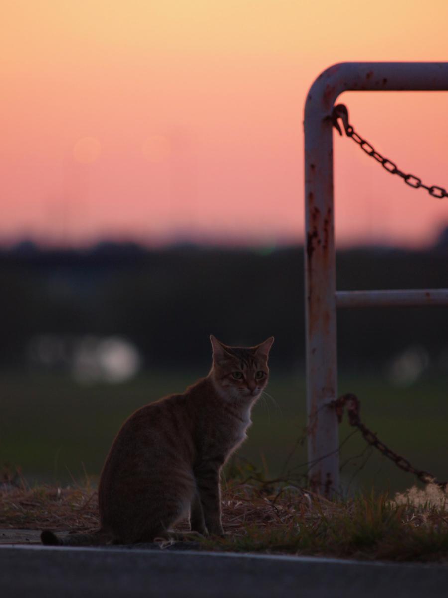 猫にゃん_f0021869_22125090.jpg