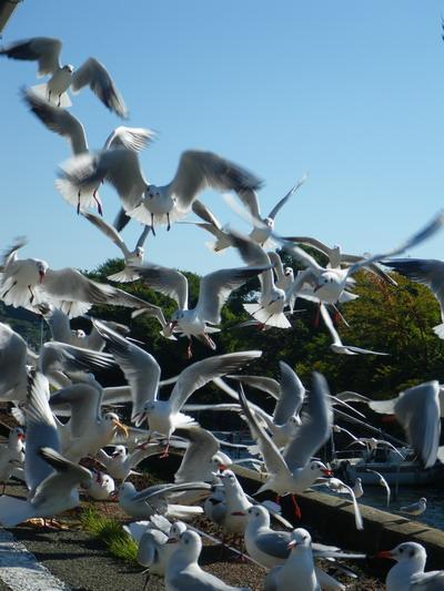鳥山。。。_c0197578_13175685.jpg