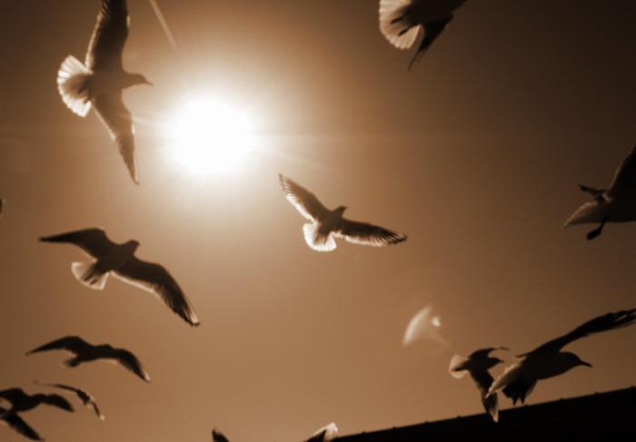 鳥山。。。_c0197578_1322665.jpg