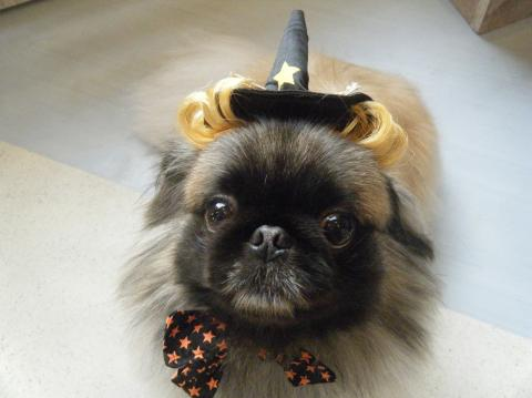 ★Happy Halloween★ 3_b0186183_1810116.jpg