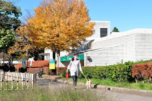 秋晴れ散歩_a0126590_5114233.jpg