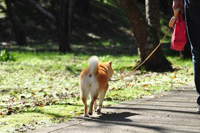 秋晴れ散歩_a0126590_53515.jpg