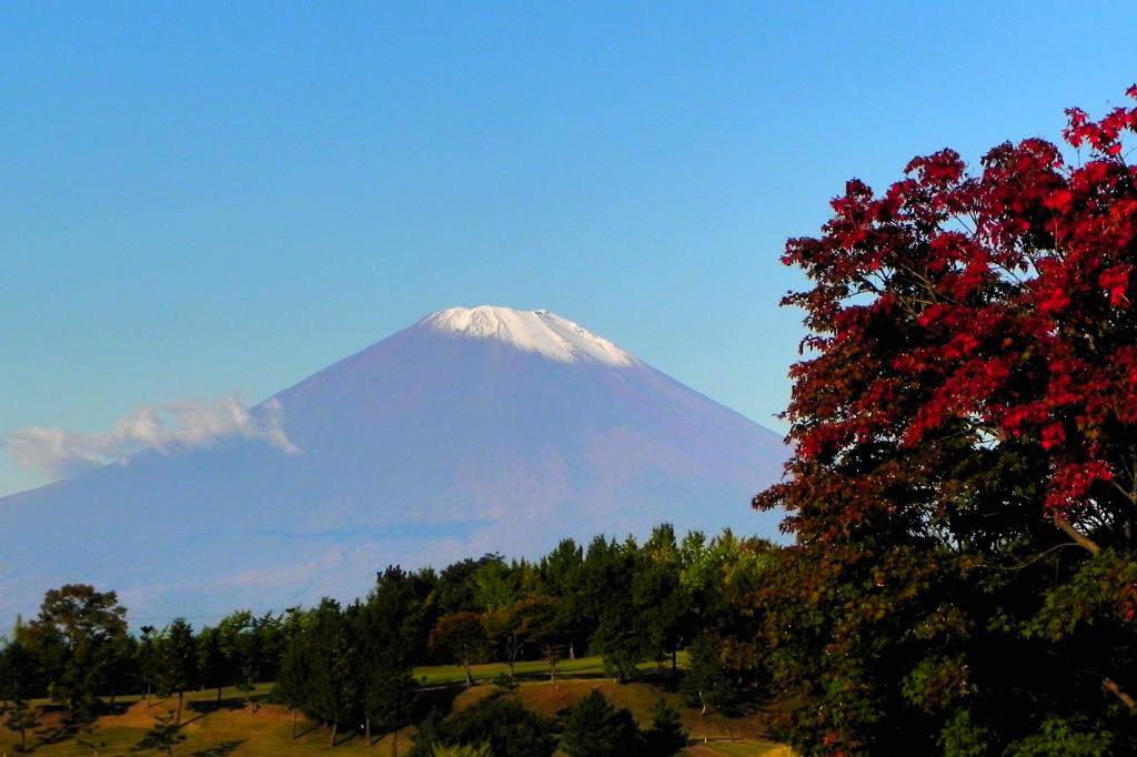 ハシビロガモ/紅葉と富士山_b0024798_611461.jpg
