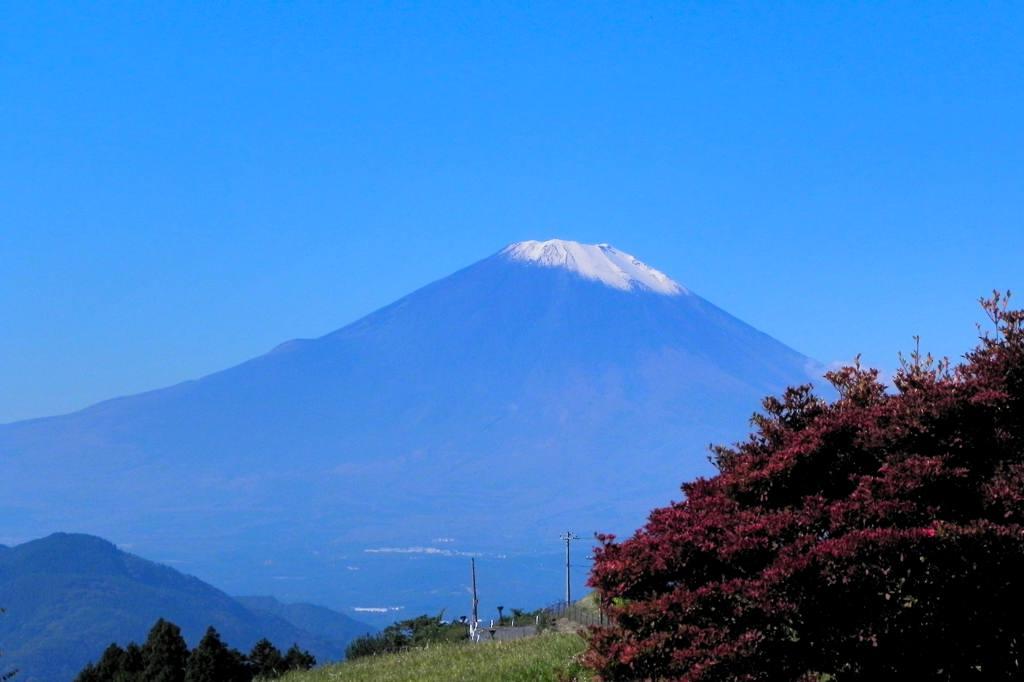 ハシビロガモ/紅葉と富士山_b0024798_6192056.jpg