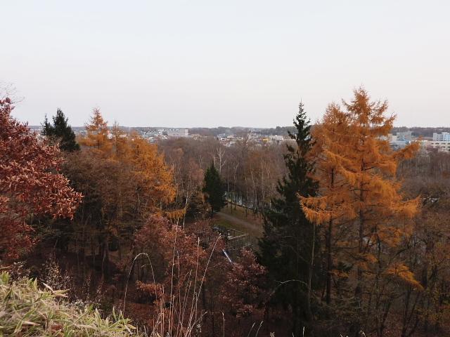2010年11月6日(土):堤防散歩_e0062415_1712283.jpg