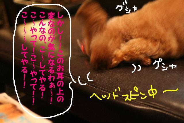 b0130018_20155891.jpg