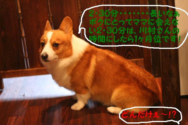 b0130018_20173338.jpg