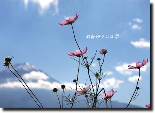 f0111147_123614.jpg