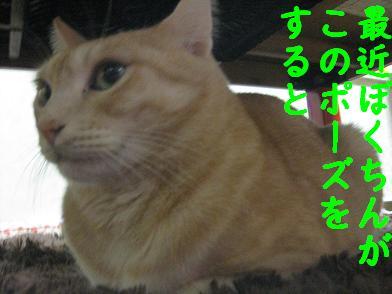 b0151748_14171845.jpg