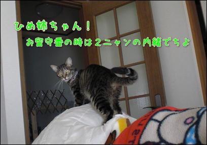 d0139352_55875.jpg