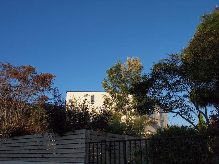 「鶴ヶ島の家」竣工から1年半……_f0230666_10502899.jpg