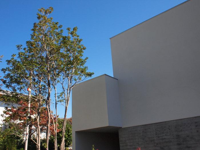 「鶴ヶ島の家」竣工から1年半……_f0230666_1114044.jpg