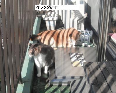 b0112380_1094463.jpg