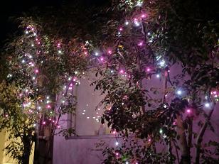 そろそろクリスマス装飾を♪_f0172281_6223238.jpg