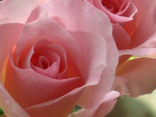 愛を伝えるキューピッドブーケ☆_e0205260_1922209.jpg