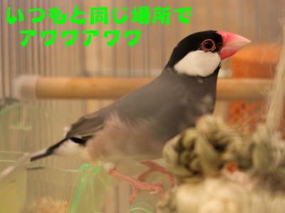 b0158061_19152755.jpg