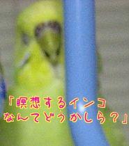 f0196665_15286.jpg