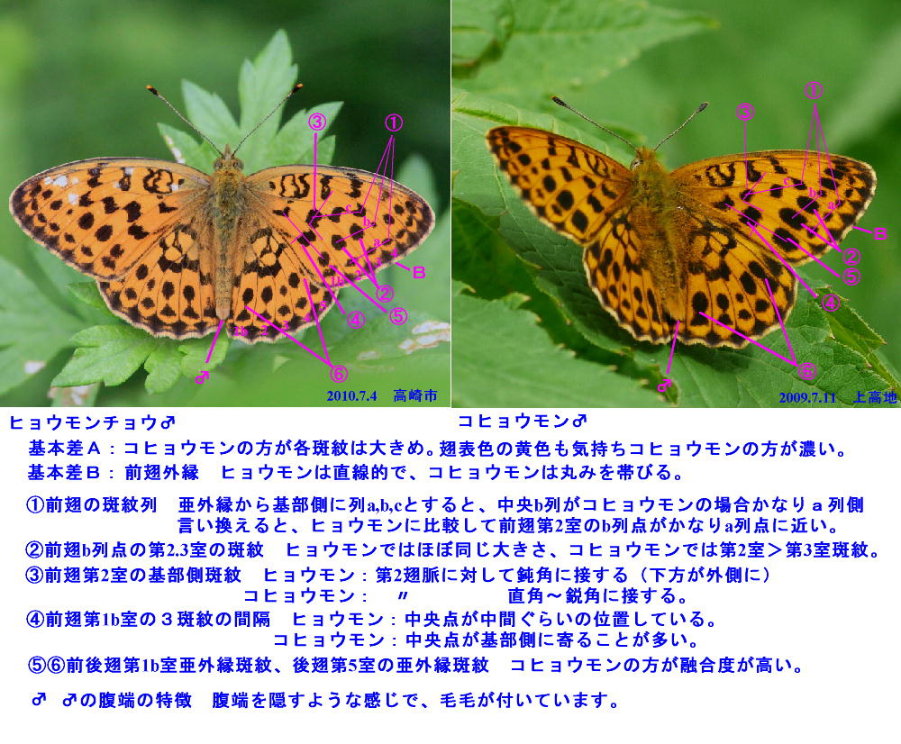 a0146869_164533.jpg