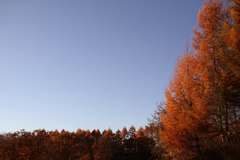 秋祭り_f0166390_2065846.jpg