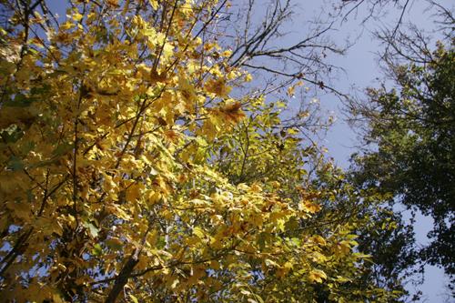 秋の晴れ間にマメ蒔き~11月の畑_f0106597_272010.jpg