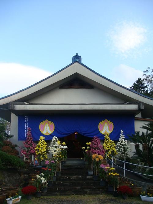 11月11日は、お寺で753法要菊花展があります。_b0188106_221218100.jpg