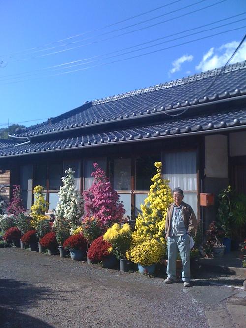 11月11日は、お寺で753法要菊花展があります。_b0188106_22203585.jpg