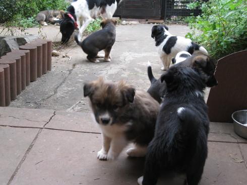 「子犬時間」~~_a0125419_16423027.jpg