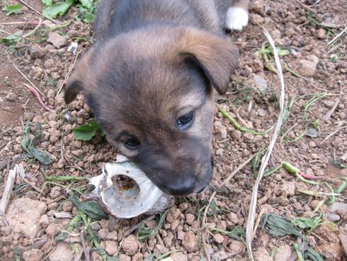 「子犬時間」~~_a0125419_1652181.jpg