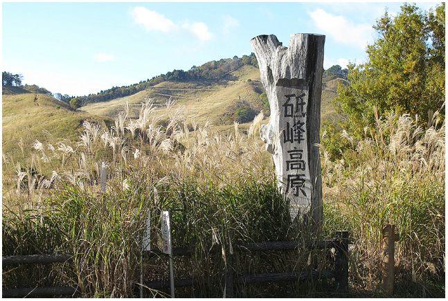 砥峰高原のススキ_c0042324_948994.jpg