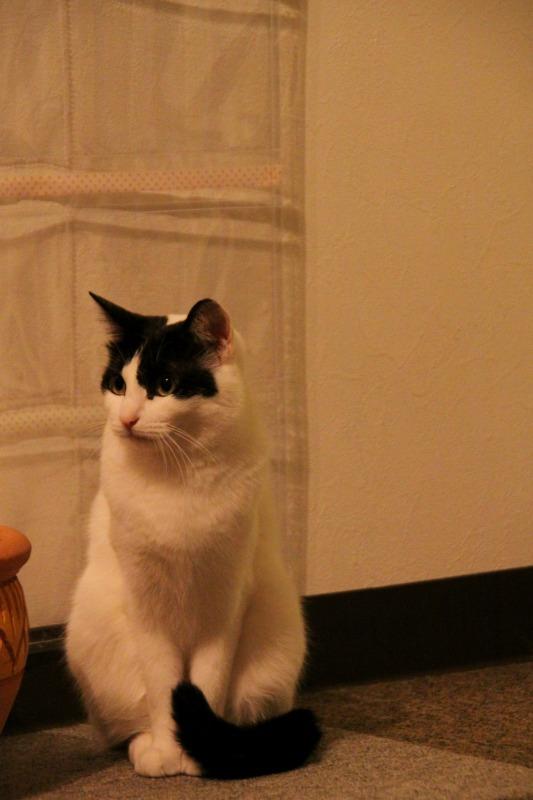 神戸市元町「cat nafe Nyanny」_d0167436_2134250.jpg