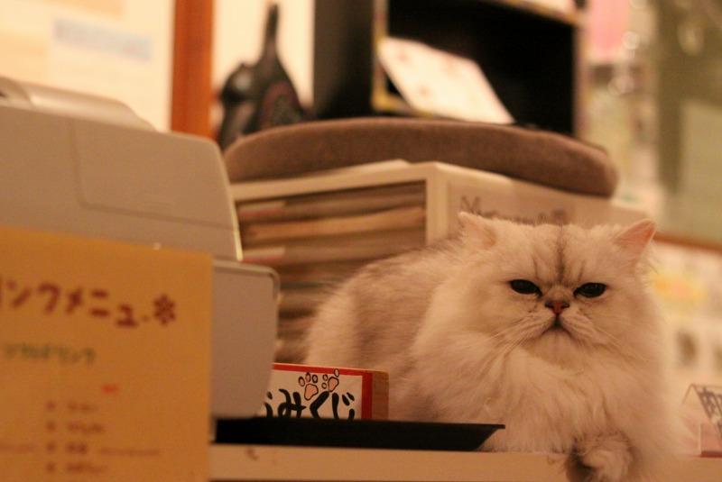 神戸市元町「cat nafe Nyanny」_d0167436_213802.jpg